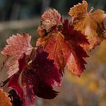 colours palette.. par Nath R. - Les Baumettes 13009 Bouches-du-Rhône Provence France