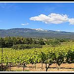 Le Mont Ventoux : vignes du ventoux par  - Mormoiron 84570 Vaucluse Provence France