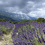 Virée autour du Mont Ventoux. On débute par le versant Nord by mary maa - Brantes 84390 Vaucluse Provence France