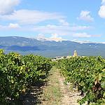 Mormoiron vue côté vigne par gab113 - Mormoiron 84570 Vaucluse Provence France
