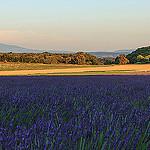 Paysage coloré de Réauville en Drôme provençale par sergegoujon - Réauville 26230 Drôme Provence France