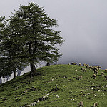 Le col du Parpaillon et ses moutons - montagne par  - Crevoux 05200 Hautes-Alpes Provence France