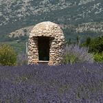 Borie et champs de lavance en Provence par by_irma - Sault 84390 Vaucluse Provence France