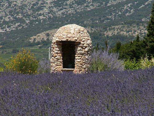 Borie et champs de lavance en Provence by by_irma