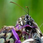 Papillon - Demi Deuil by bernard.bonifassi -   Alpes-Maritimes Provence France