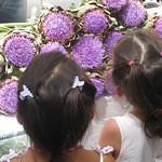 Saint Rémy de Provence - Purple artichokes flowers by Andrew Findlater - St. Rémy de Provence 13210 Bouches-du-Rhône Provence France