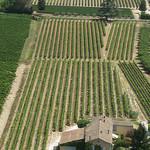 Les vignes bien alignées de Menerbes par Andrew Findlater - Ménerbes 84560 Vaucluse Provence France