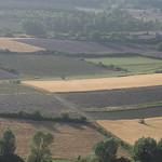 Landscape : lavender fields from Sault - Provence par Andrew Findlater - Sault 84390 Vaucluse Provence France