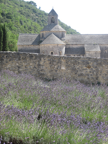 Abbey of Senanque and lavender fields by Andrew Findlater