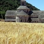L'abbaye de Sénanque sur champs de blé par Mattia Camellini - Gordes 84220 Vaucluse Provence France