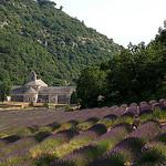 Abbaye de Sénanque by Gatodidi - Gordes 84220 Vaucluse Provence France