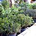 Marché : herbes de Provence par flablabla - Cannes 06400 Alpes-Maritimes Provence France