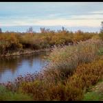 bords de rives en Camargue by Patchok34 -   Bouches-du-Rhône Provence France