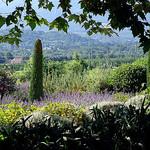 Verdure et lavande en Cabrières d'Avignon par Mattia Camellini - Cabrieres d'Avignon 84220 Vaucluse Provence France