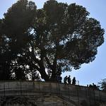 Le Rocher des Doms par Laurent2Couesbouc - Avignon 84000 Vaucluse Provence France