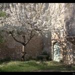 Le printemps 2010 est là ! by Brigitte Mazéas -   provence Provence France