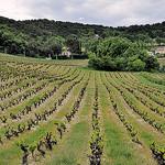 Mai : la Vigne recommence à verdir by L_a_mer -   provence Provence France