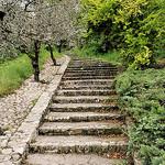 Escalier à verdure by L_a_mer - Vaison la Romaine 84110 Vaucluse Provence France