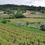 Vignes au printemps par L_a_mer - Vaison la Romaine 84110 Vaucluse Provence France