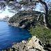 Côte d'Azur : Hyères les palmiers by JP-ZMR - Giens 83400 Var Provence France