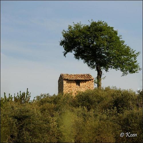 Le cabanon et l'arbre par koen_photos
