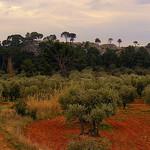 Oliviers dans les Alpilles by Super.Apple - Aureille 13930 Bouches-du-Rhône Provence France