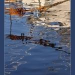Reflets à Sanary par Brigitte Mazéas - Sanary-sur-Mer 83110 Var Provence France