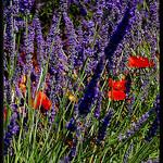Les couleures de l'été by Patchok34 - Quinson 04500 Alpes-de-Haute-Provence Provence France