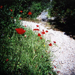 Contrastes de Coquelicots par A Pair of Brown Eyes -   provence Provence France