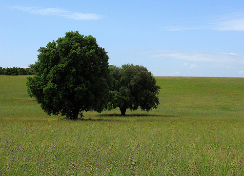Provence par mistinguette18