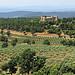 Oliviers et château par mistinguette18 - Tourtour 83690 Var Provence France