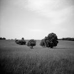Paysage Noir et Blanc - Provence by mistinguette18 -   Var Provence France