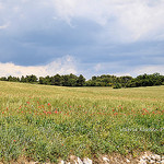 Prairie en Provence by L_a_mer -   Vaucluse Provence France