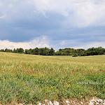 Prairie en Provence par L_a_mer -   Vaucluse Provence France