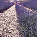 perspective de lavande by kintosha - Aix-en-Provence 13100 Bouches-du-Rhône Provence France