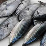 Fish market - Marseille par kurzi - Marseille 13000 Bouches-du-Rhône Provence France