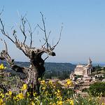 Bédoin, Provence by Marcxela - Bédoin 84410 Vaucluse Provence France