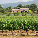 Vineyards of Provence. by Marcxela - Bédoin 84410 Vaucluse Provence France