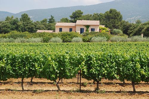 Vineyards of Provence. by Marcxela