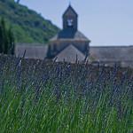 Lavande de Sénanque par GUGGIA - Gordes 84220 Vaucluse Provence France