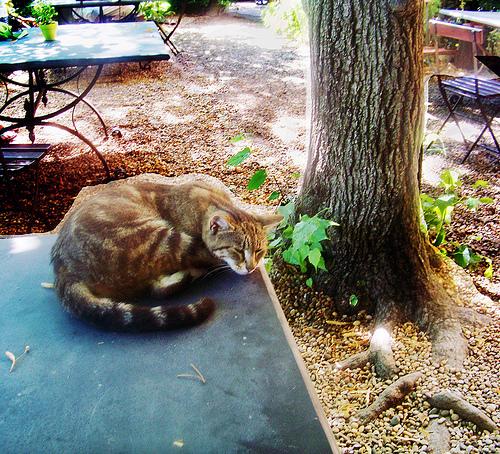 Aix en Provence cezannes cat par photoartbygretchen
