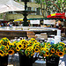 Uzes Market : Sunflowers par  - Uzs 30700 Gard Provence France