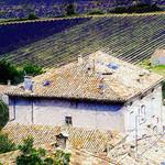 Tuiles et lavandes par photoartbygretchen -   Bouches-du-Rhône Provence France
