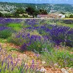 Provence lavender fields by photoartbygretchen -   Bouches-du-Rhône Provence France