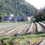 Abbaye de Sénanque by jackie bernelas - Gordes 84220 Vaucluse Provence France