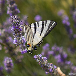 "Butterfly... ""le flambé"" by Young Crazy Fool - Les Baux de Provence 13520 Bouches-du-Rhône Provence France"