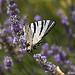 """Butterfly... """"le flambé"""" by Young Crazy Fool - Les Baux de Provence 13520 Bouches-du-Rhône Provence France"""