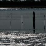 Reflets sur l'étang - Camargue par :-:claudiotesta:-: -   Bouches-du-Rhône Provence France