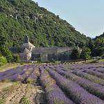 La magnifique Abbaye de Sénanque by :-:claudiotesta:-: - Gordes 84220 Vaucluse Provence France