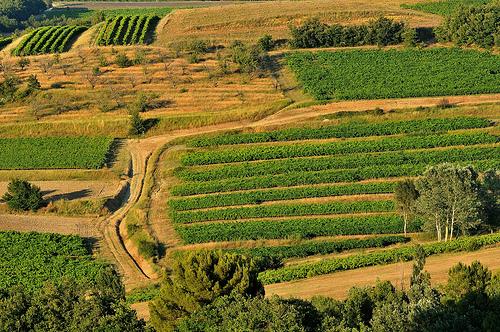 La campagne autour de Roussillon par :-:claudiotesta:-: